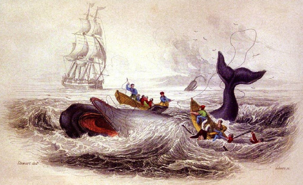 """The Spermacetti Whale"" by J. Stewart, 1837. New Bedford Whaling Museum."