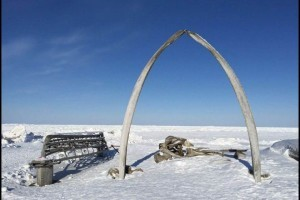 Whale bones are often raised where a whale has been landed after a hunt. Barrow Alaska. © Michaela Goertzen