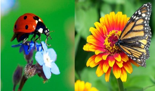 Help save our pollinators: EU online public consultation opened