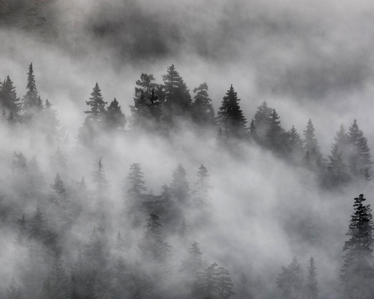 fog_byJohnWestrock