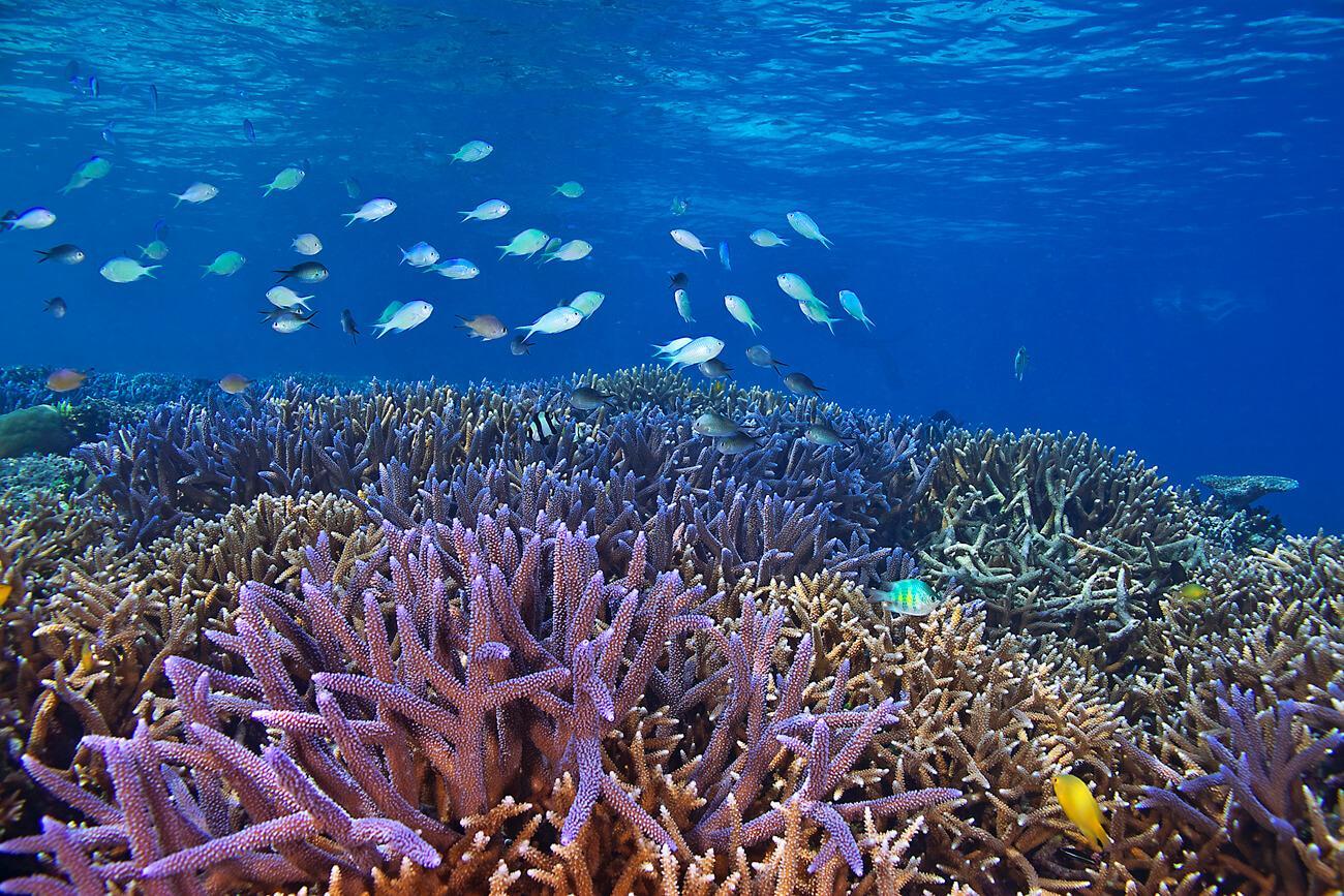 © Keoki Stenderm source: www.oceanicsociety.org