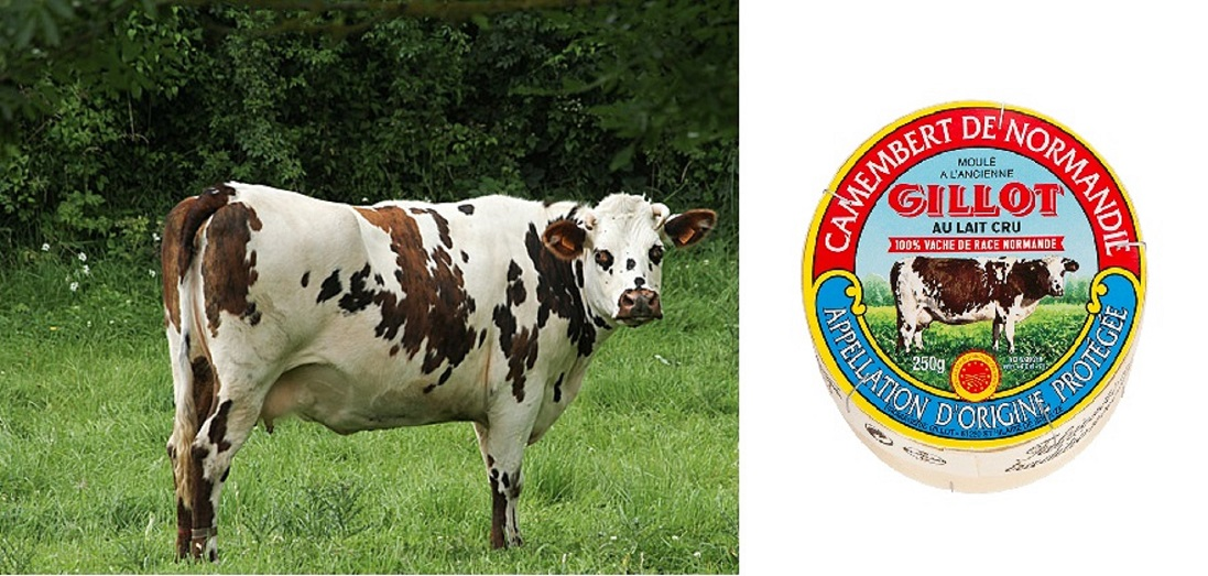 vache la normande with camembert